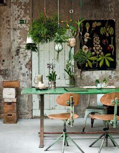 hangende-planten