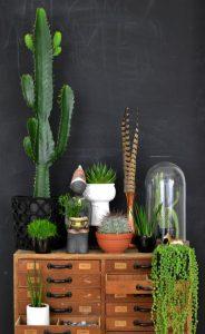 gegroupeerde-planten