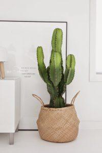 cactus-homedeco